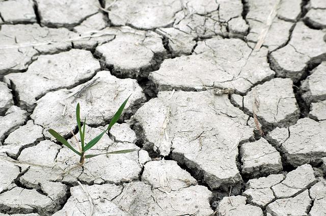 Cómo afecta en Andalucía el cambio climático en la agricultura